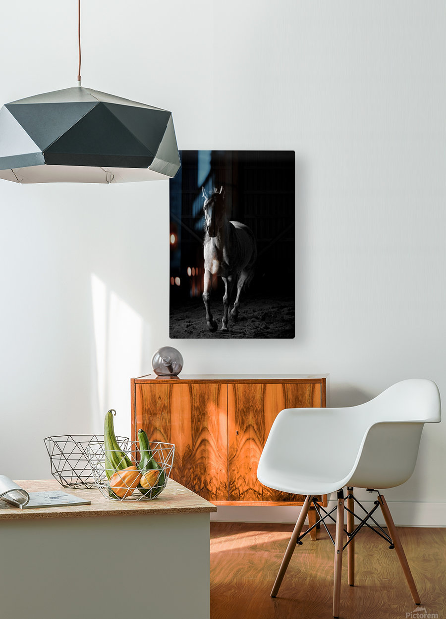 Studio Horses  HD Metal print with Floating Frame on Back