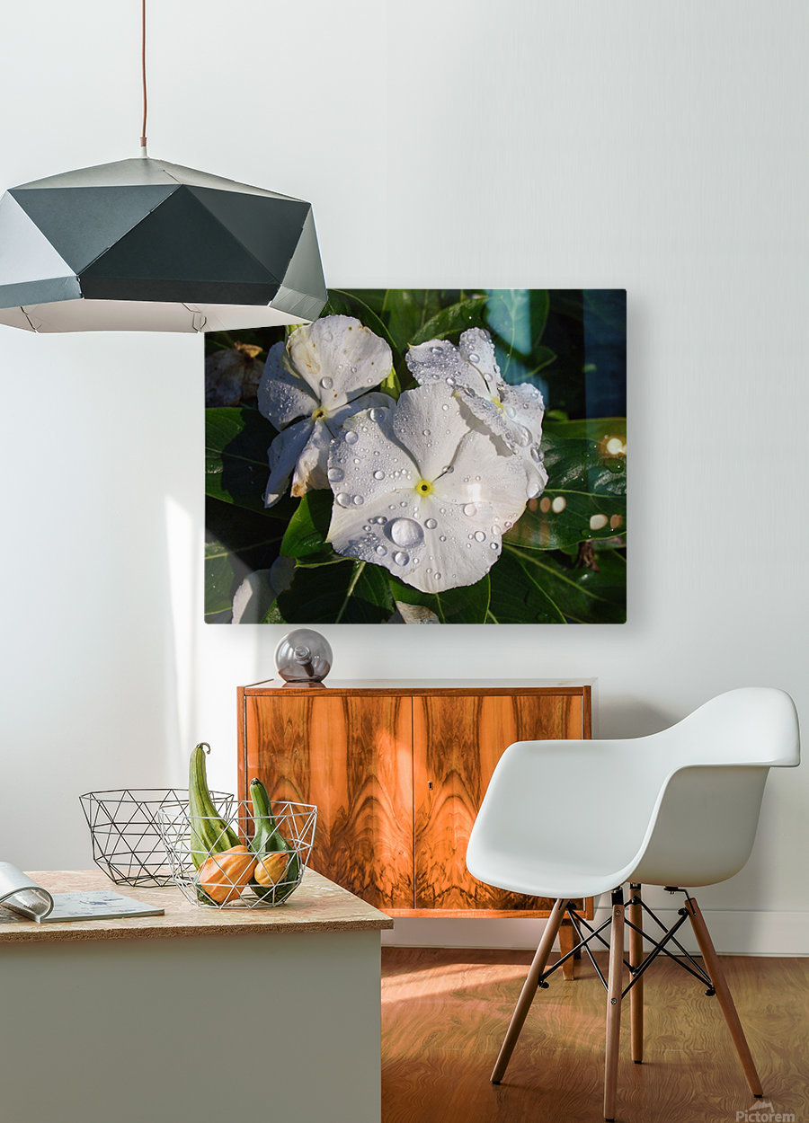 Vinca  HD Metal print with Floating Frame on Back