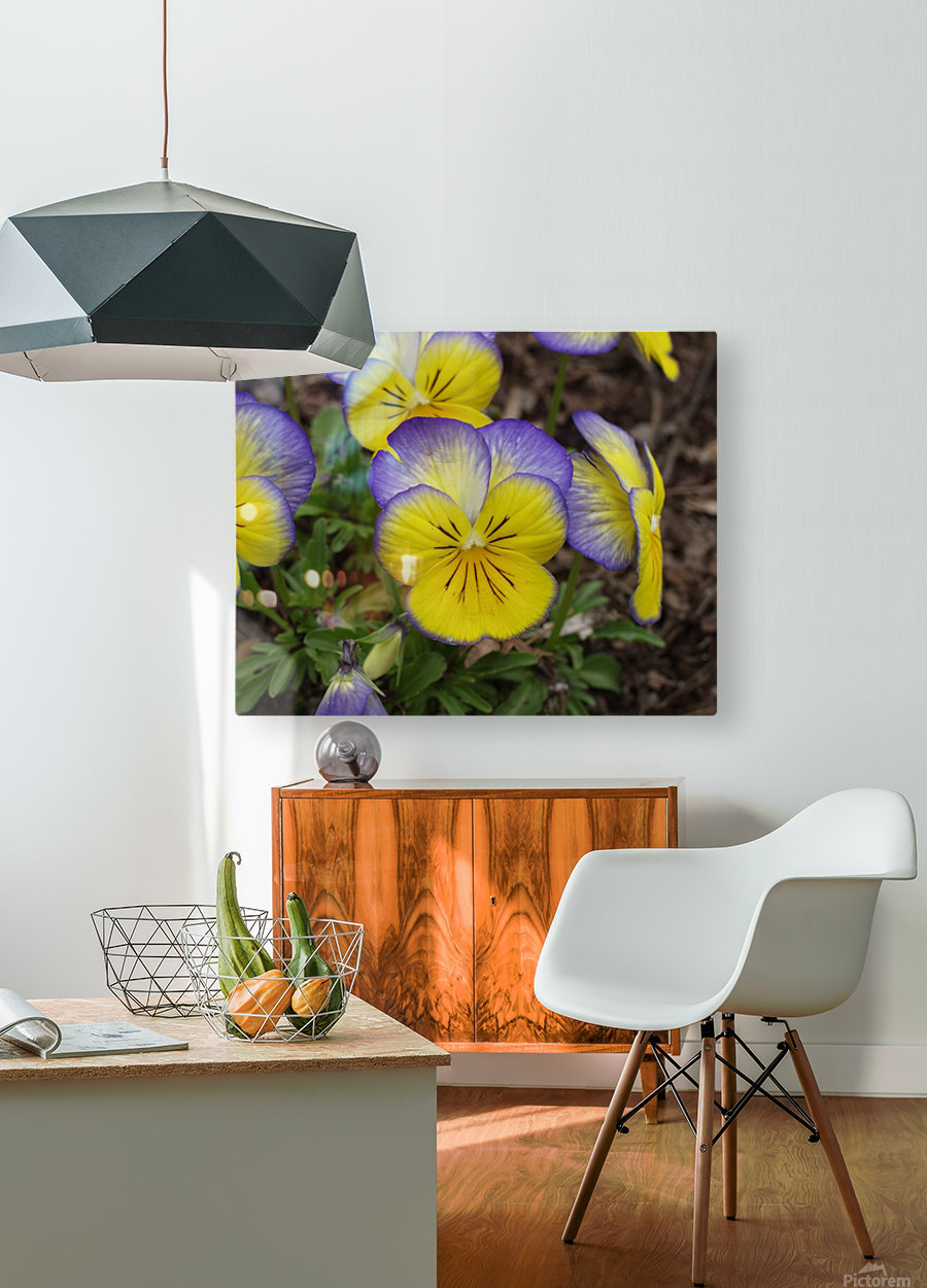 Pansy  HD Metal print with Floating Frame on Back