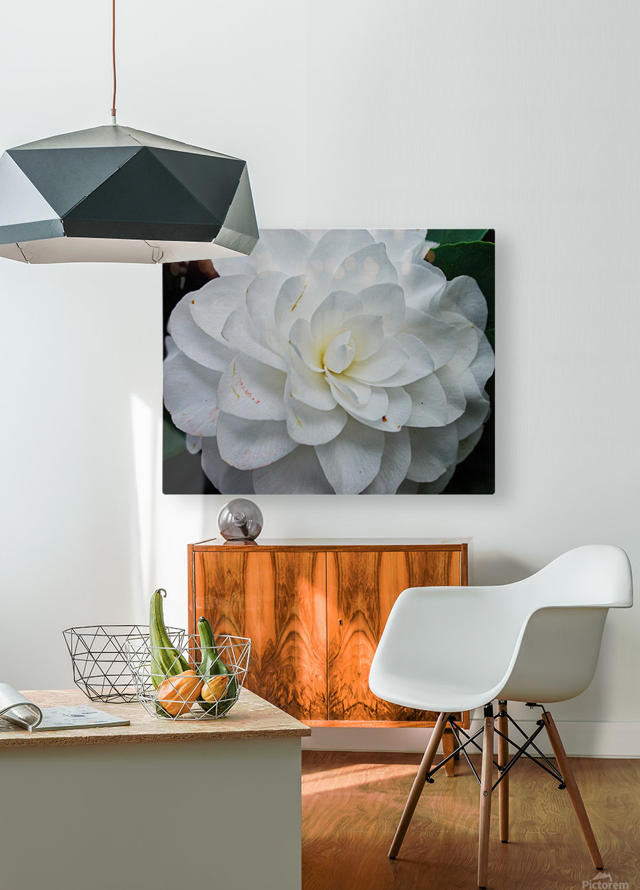 Camelia  HD Metal print with Floating Frame on Back