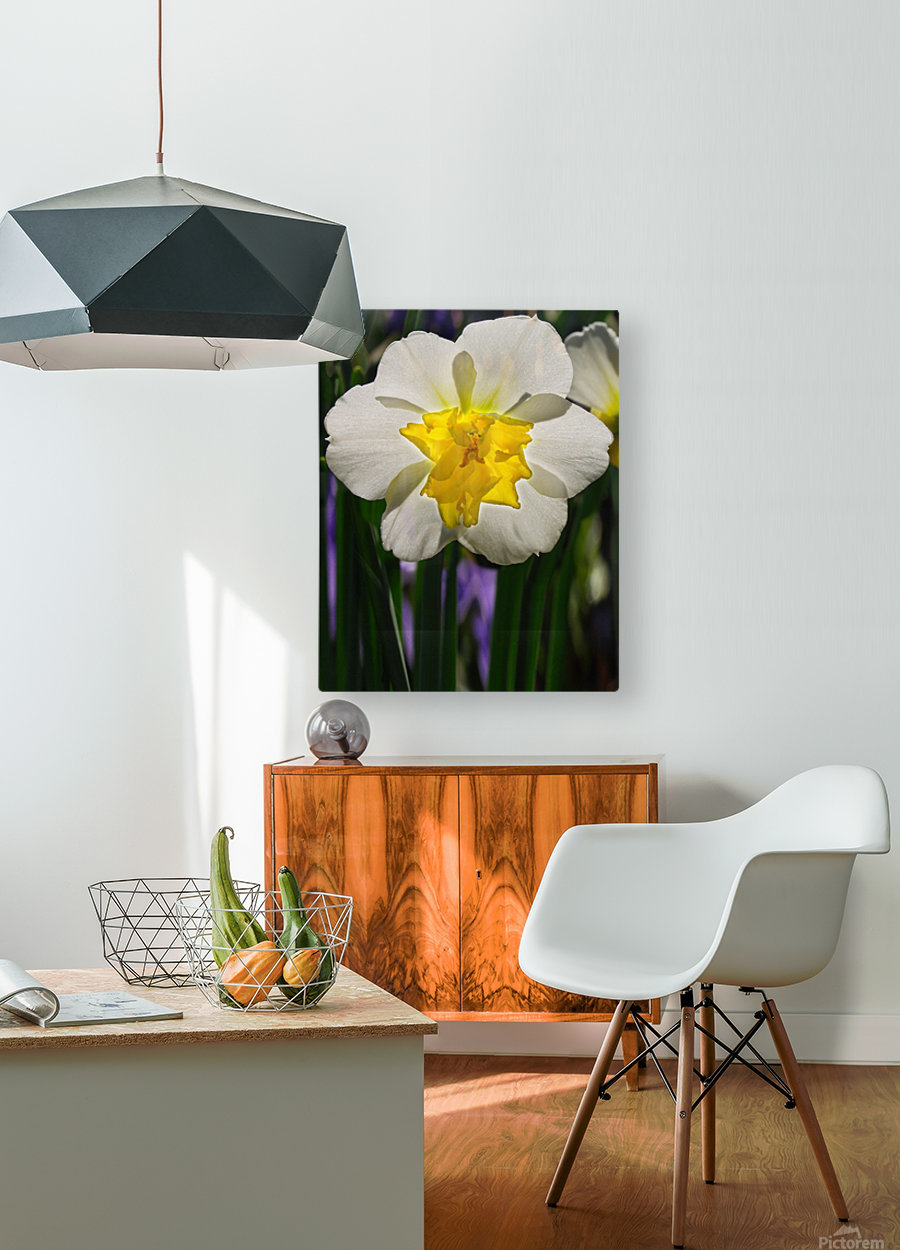 White Daffodil  HD Metal print with Floating Frame on Back