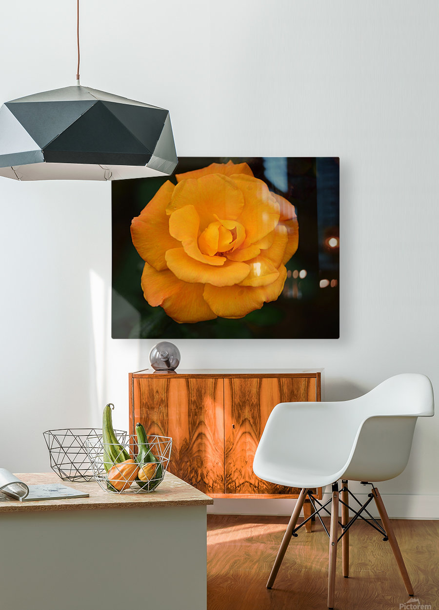 Orange Rose  HD Metal print with Floating Frame on Back