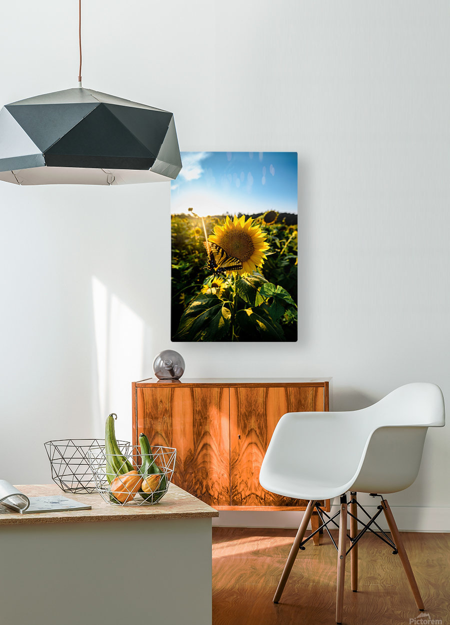 Sunflower Love  HD Metal print with Floating Frame on Back