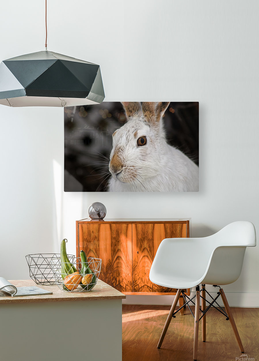 Mr Rabbit  HD Metal print with Floating Frame on Back