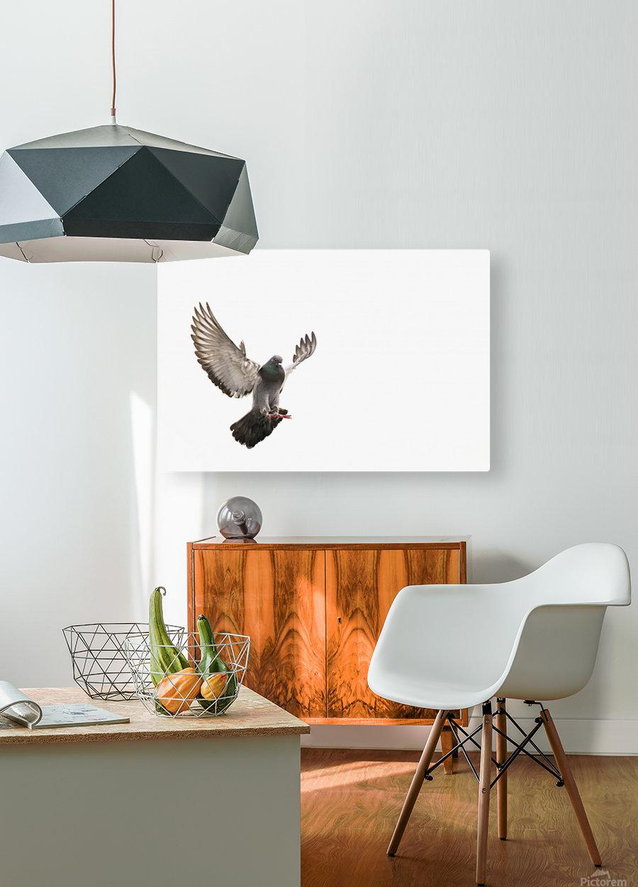 Take Flight  HD Metal print with Floating Frame on Back