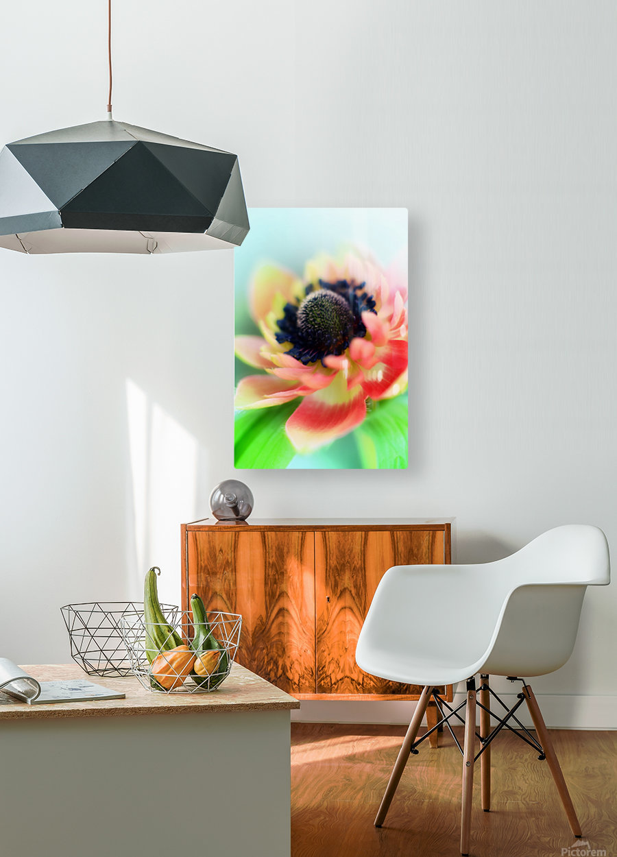 Anemone de Caen  HD Metal print with Floating Frame on Back