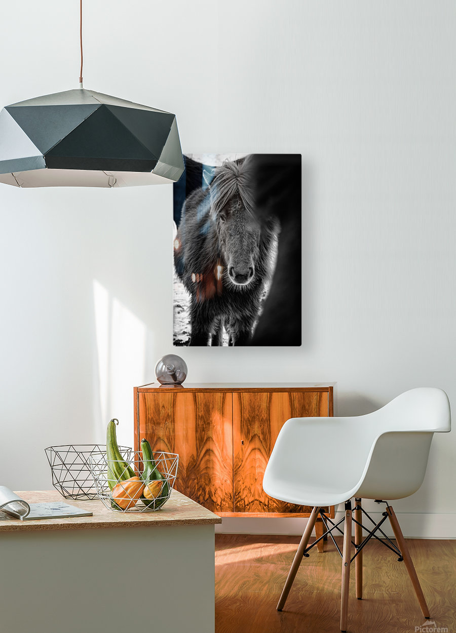 Icelandic Foal  HD Metal print with Floating Frame on Back