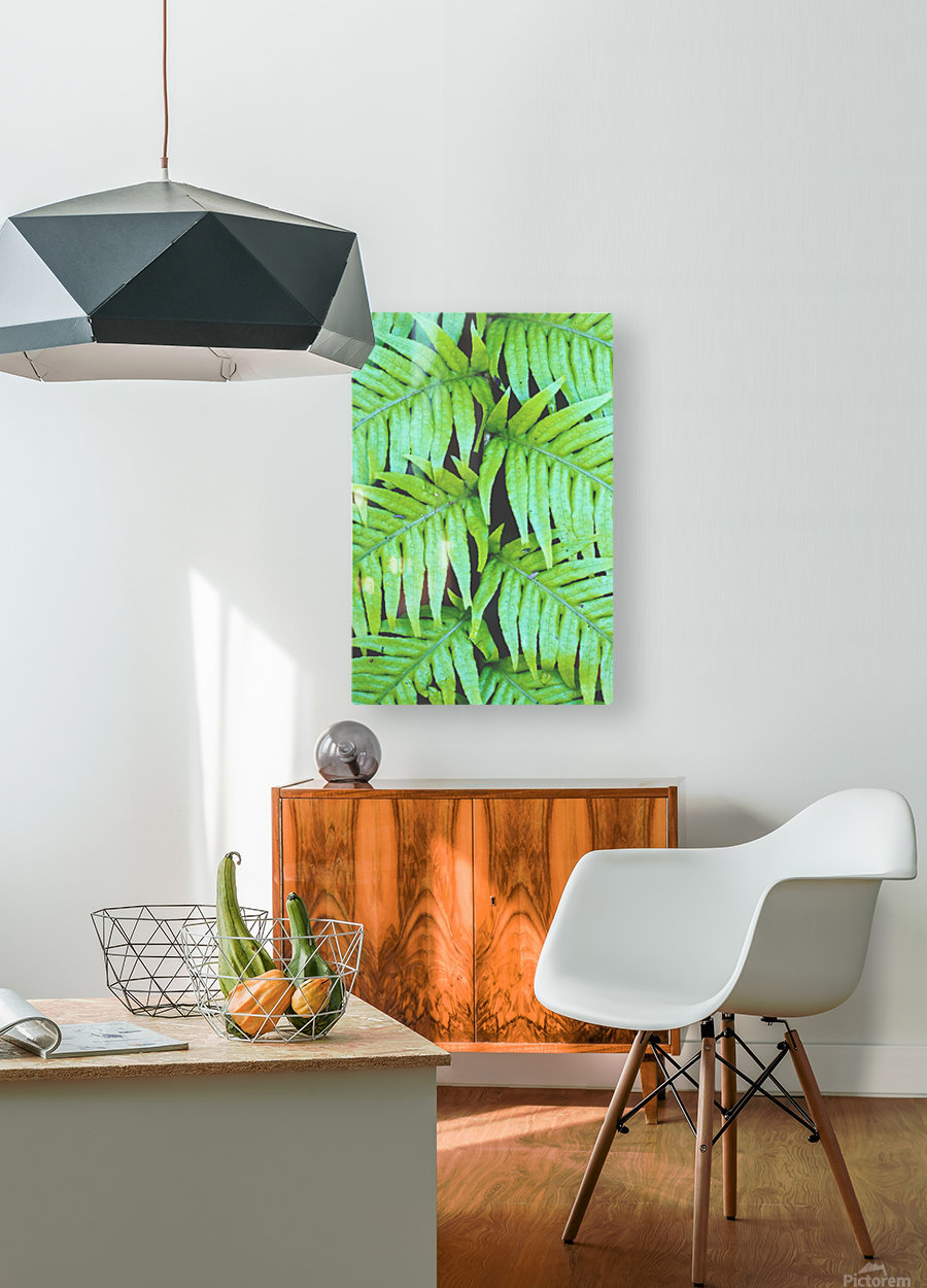 Fern Leaves  HD Metal print with Floating Frame on Back