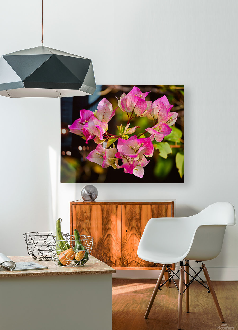 Bougainvillea  HD Metal print with Floating Frame on Back