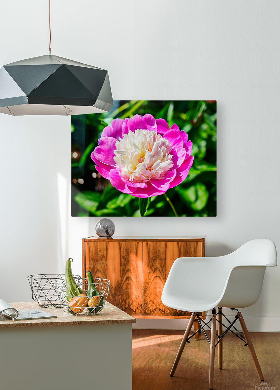 Peony  HD Metal print with Floating Frame on Back