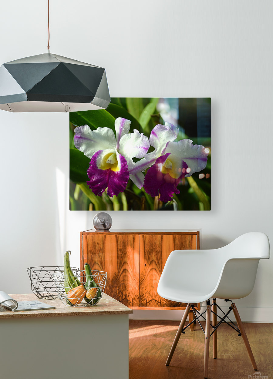 Purple And White Orchids  HD Metal print with Floating Frame on Back