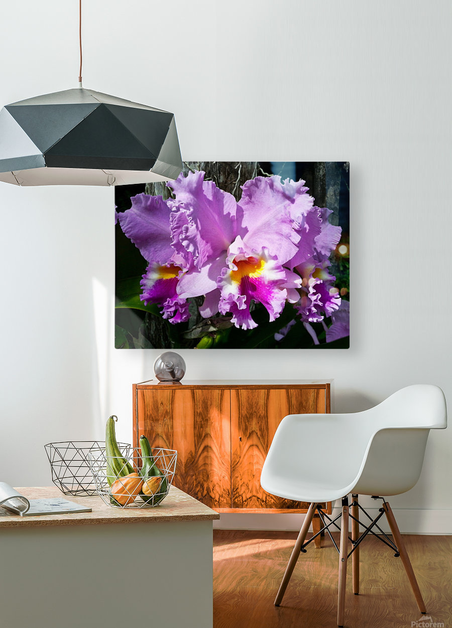 Frilly Orchid  HD Metal print with Floating Frame on Back