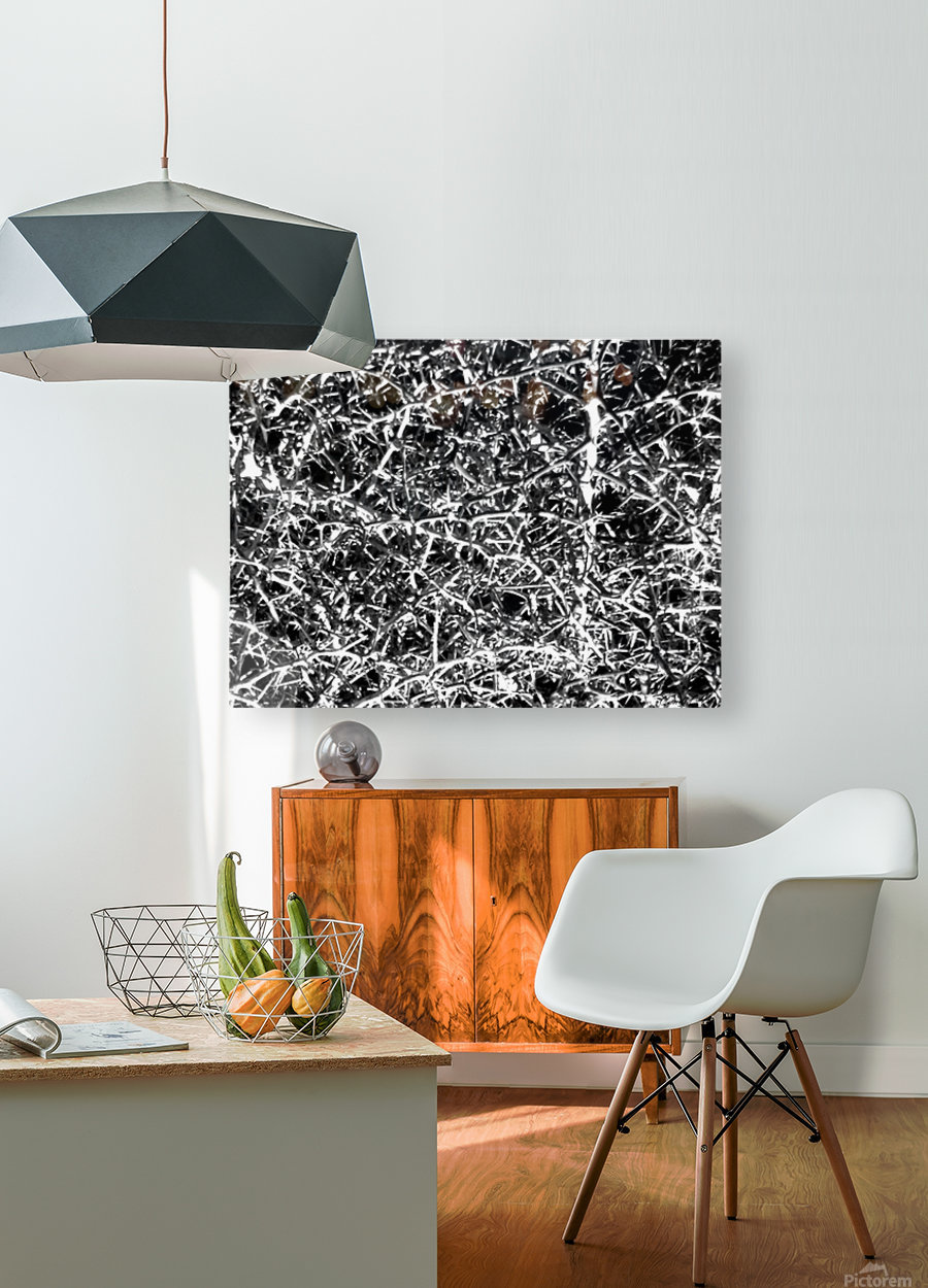 Black & White Nature  HD Metal print with Floating Frame on Back