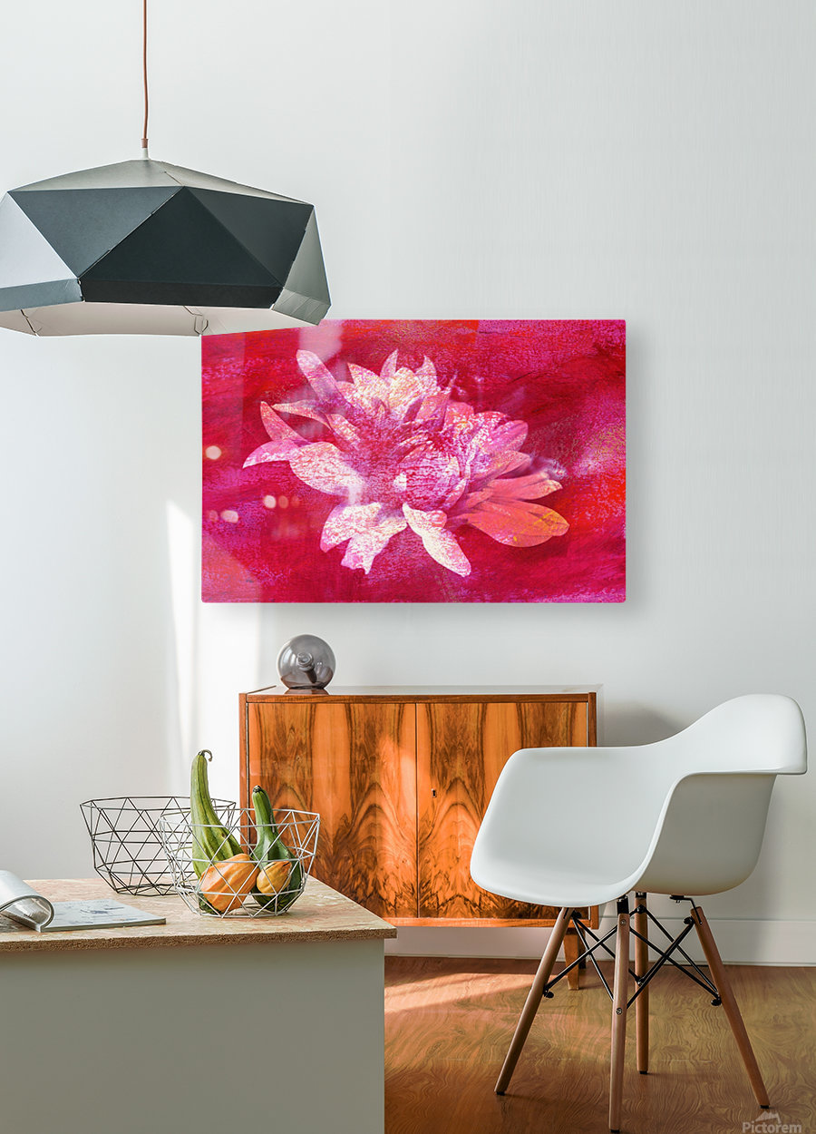 Modern Pink Dahlia  HD Metal print with Floating Frame on Back