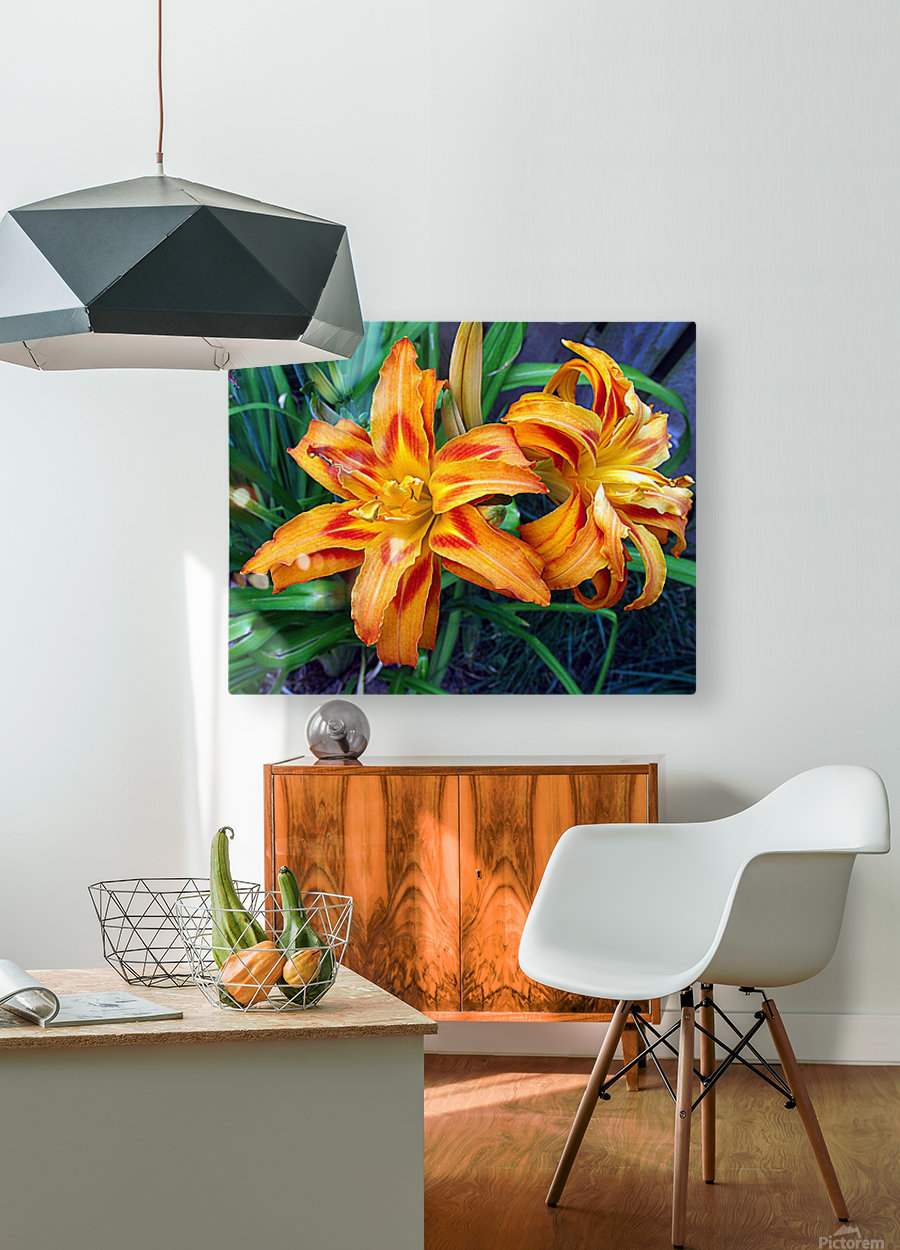 Day Lilies  HD Metal print with Floating Frame on Back