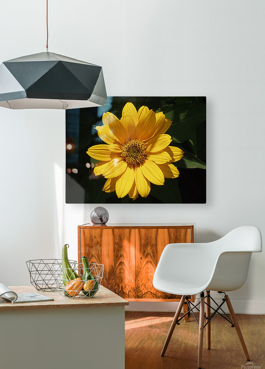Yellow Zinnia  HD Metal print with Floating Frame on Back