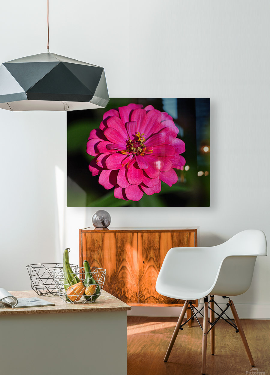 Zinnia  HD Metal print with Floating Frame on Back