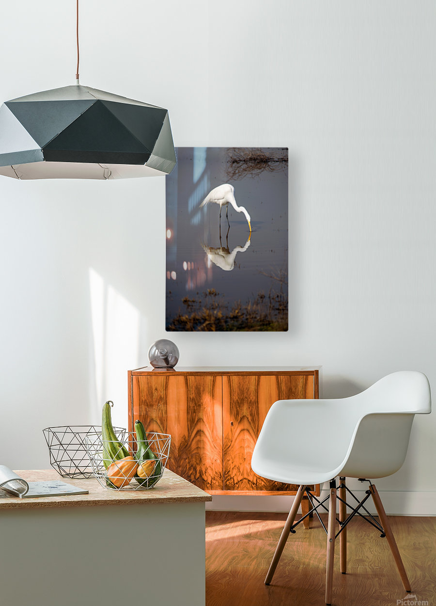 The Kiss White Egret  HD Metal print with Floating Frame on Back