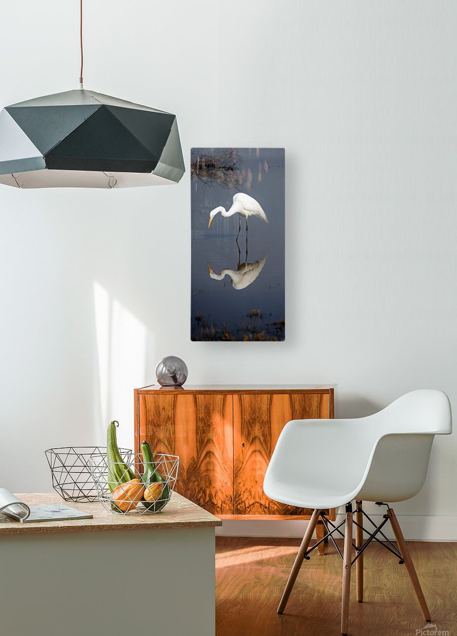 Who Are You White Egret  HD Metal print with Floating Frame on Back
