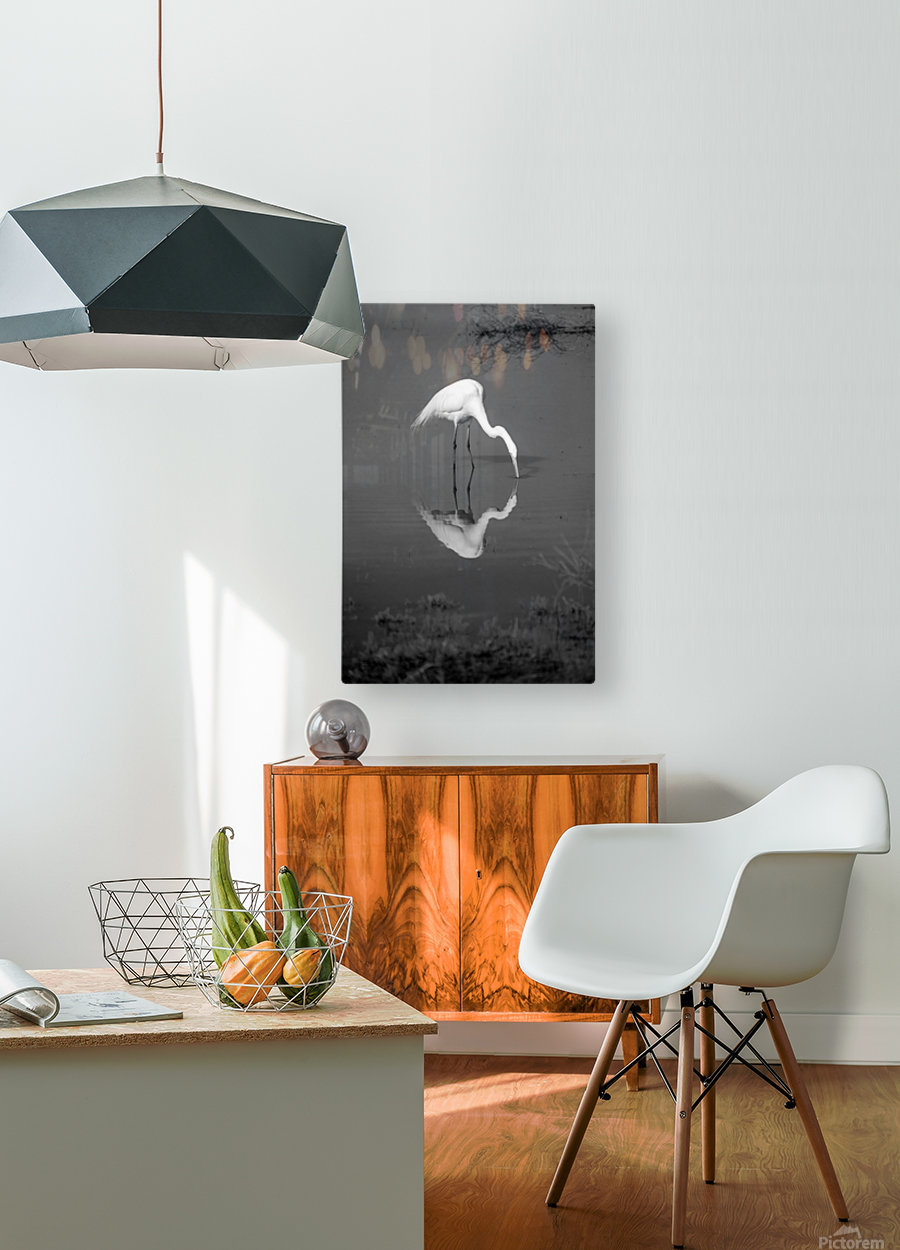 The Kiss White Egret BW  HD Metal print with Floating Frame on Back