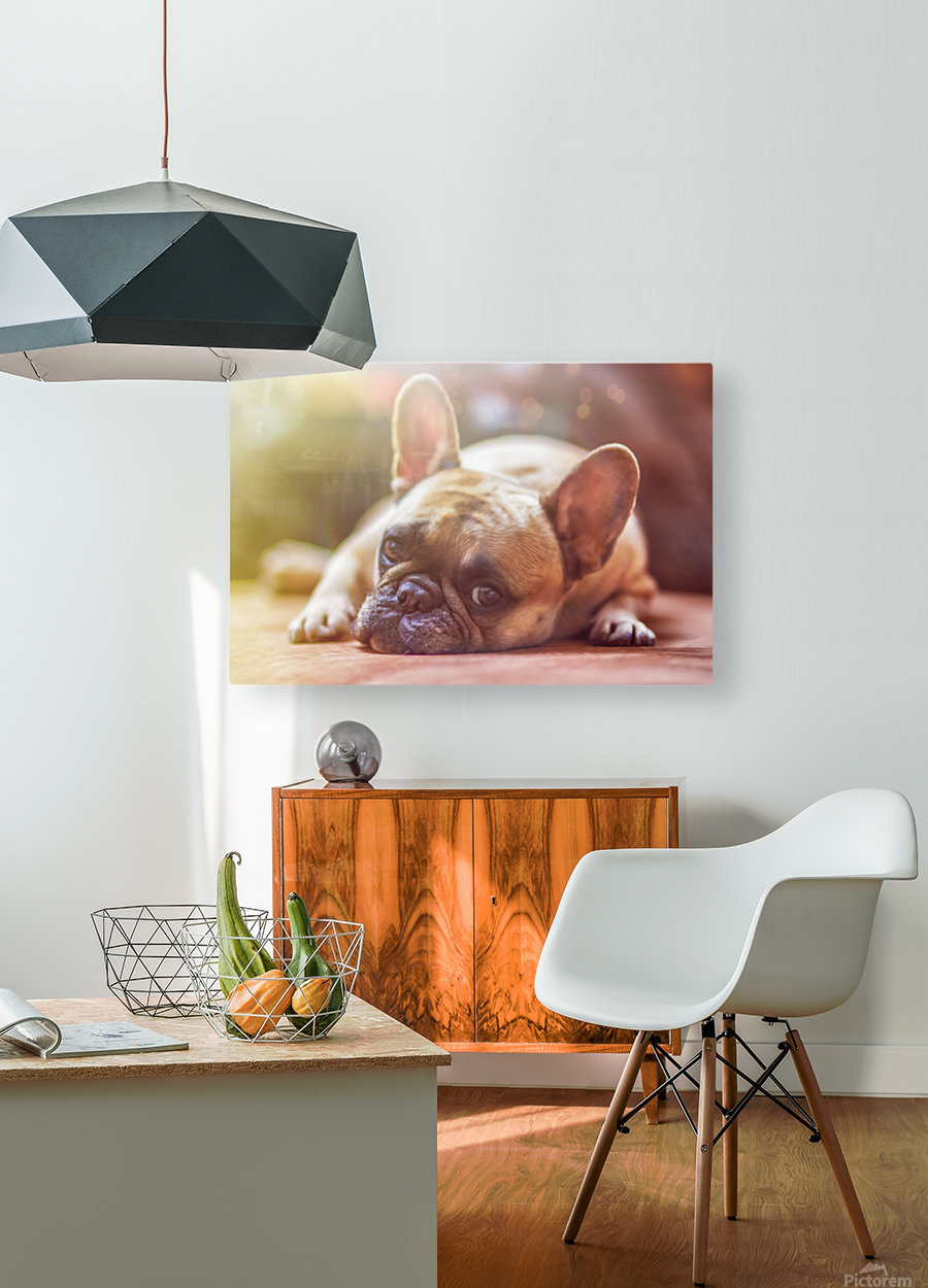 Sweet bully  HD Metal print with Floating Frame on Back