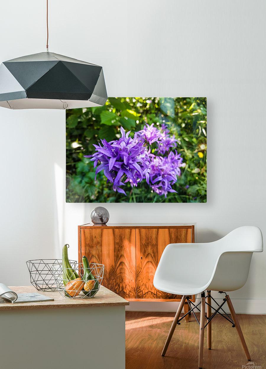 Violet flowers  HD Metal print with Floating Frame on Back