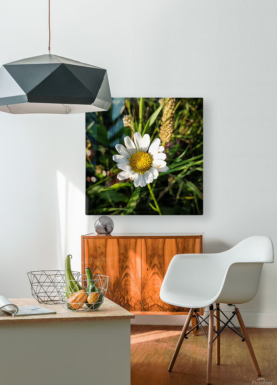 Little daisy in grass  HD Metal print with Floating Frame on Back