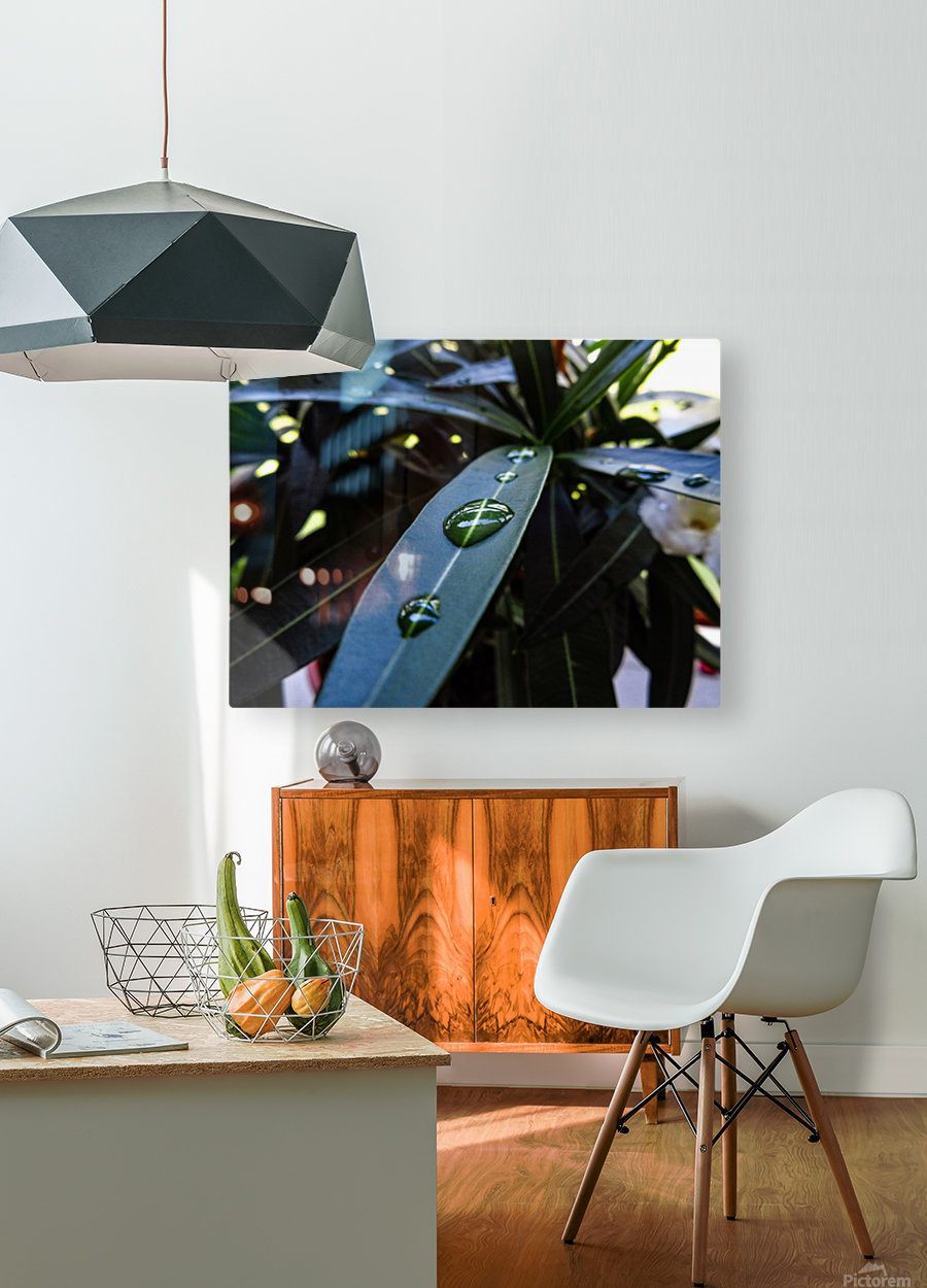 Raindrop on a green leaf  HD Metal print with Floating Frame on Back