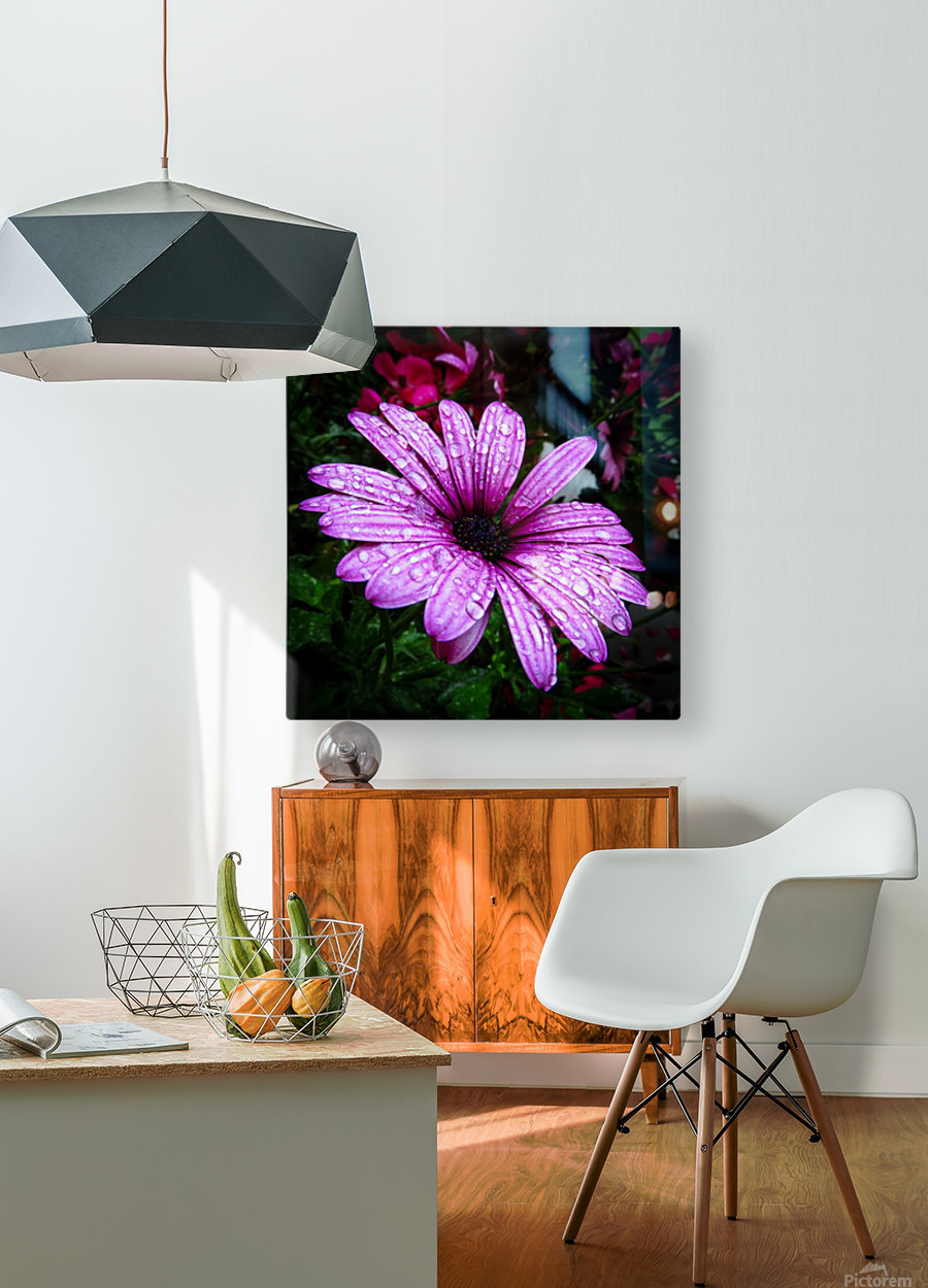 Violet flower with raindrops  HD Metal print with Floating Frame on Back