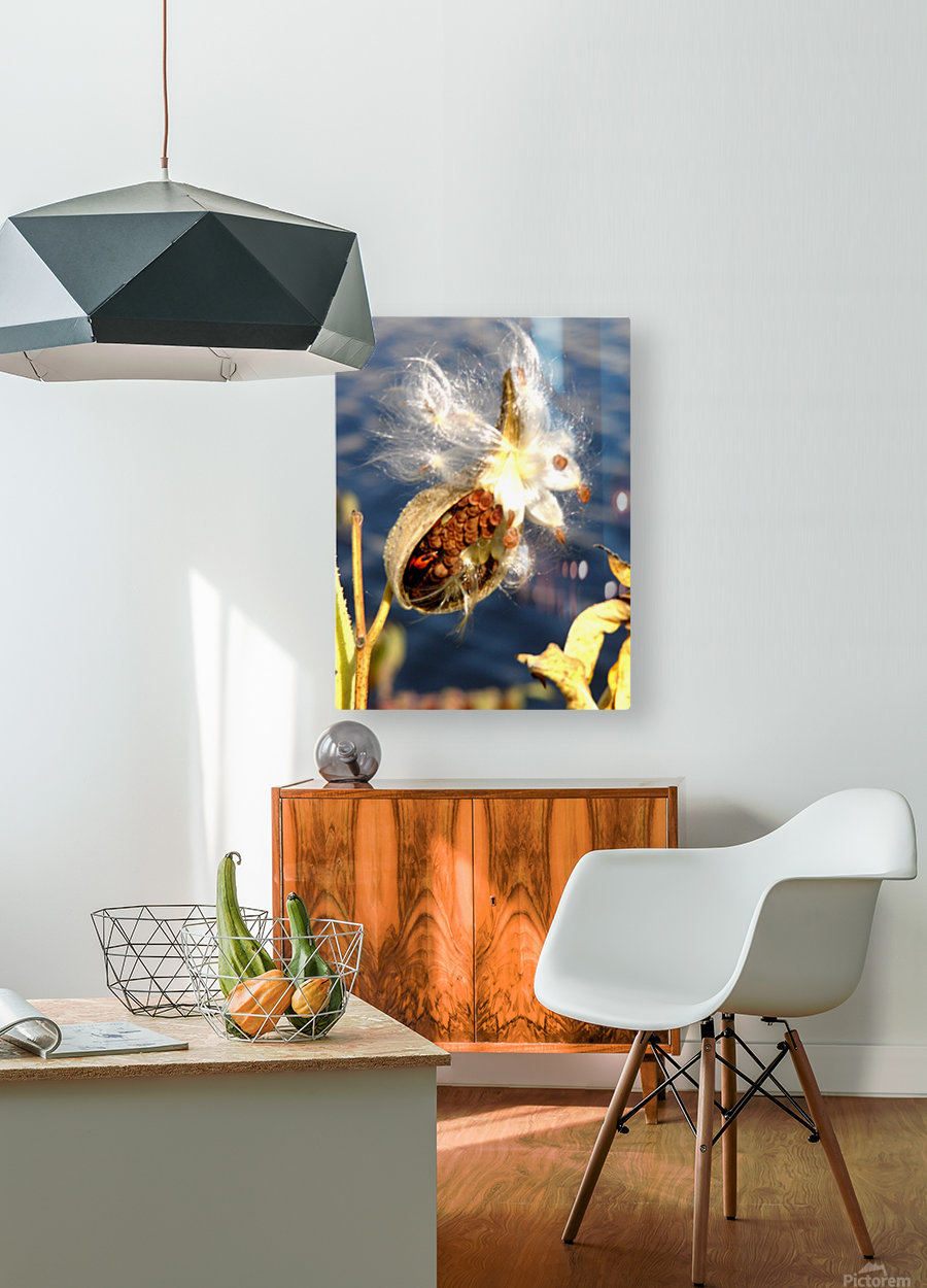 Wild Thing  HD Metal print with Floating Frame on Back