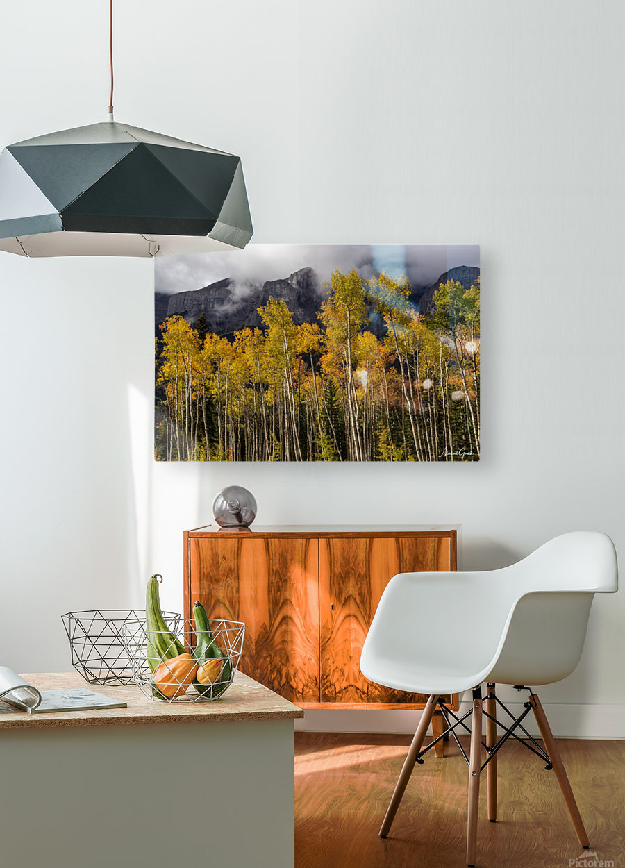 Aspens In Fall Banff National Park  HD Metal print with Floating Frame on Back