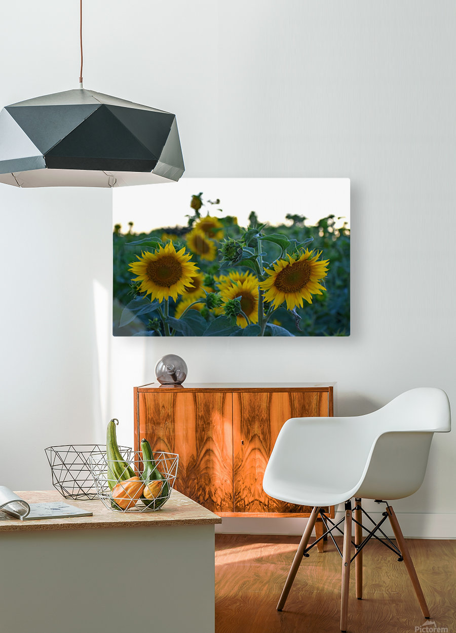 Sunflower Family  HD Metal print with Floating Frame on Back