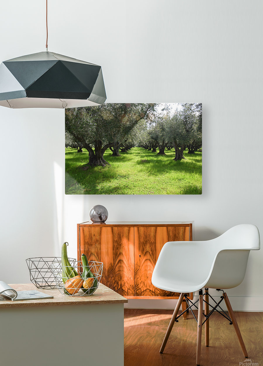 Olive Orchard In Spring  HD Metal print with Floating Frame on Back