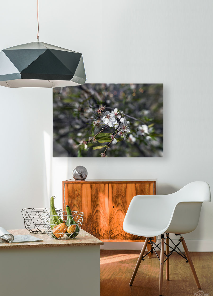 Flowering almonds 2  HD Metal print with Floating Frame on Back