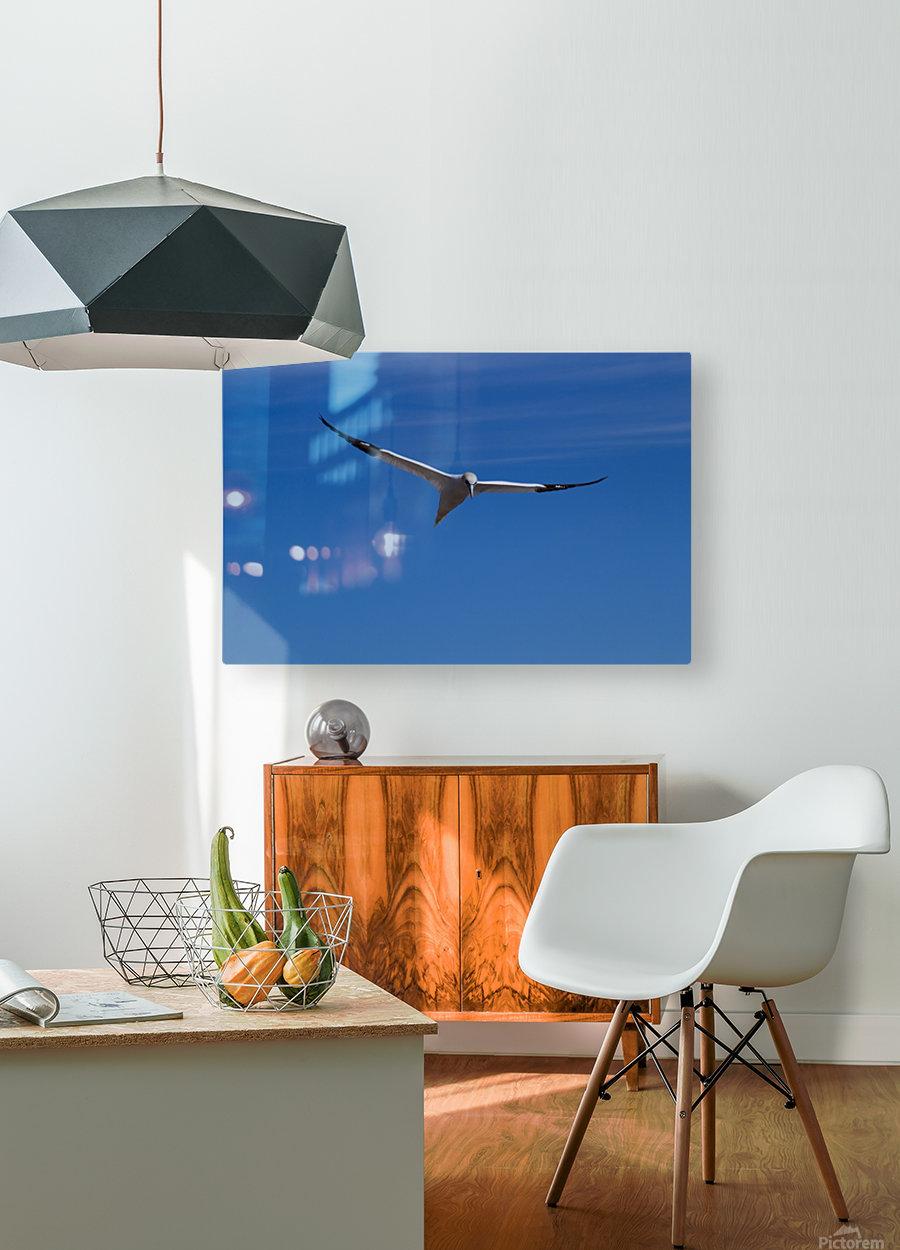 Fou de Bassan  HD Metal print with Floating Frame on Back