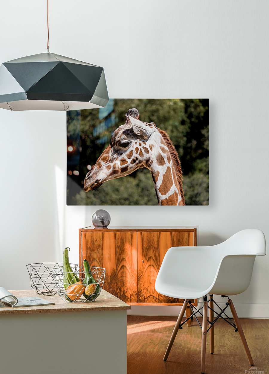 Profile of a Giraffe  HD Metal print with Floating Frame on Back