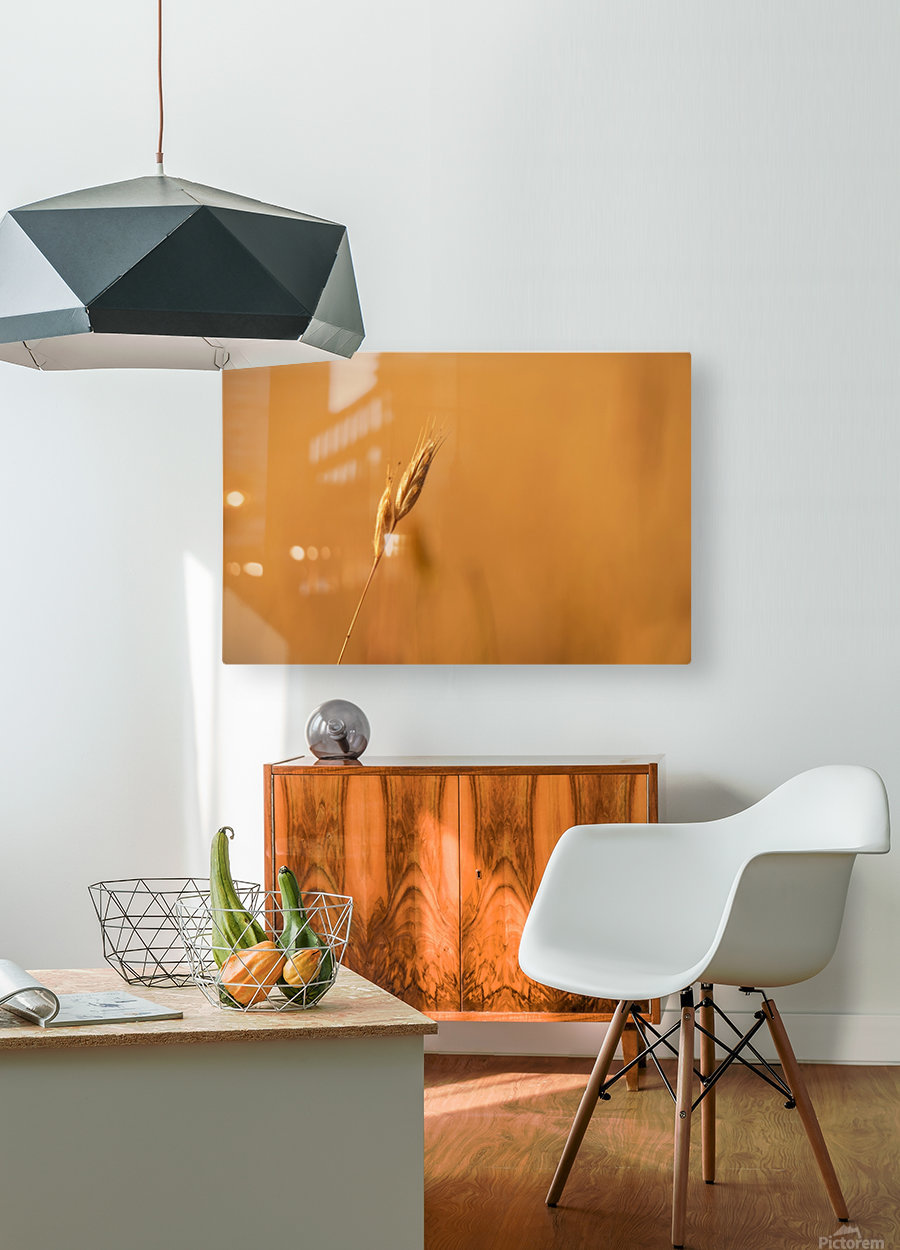 Golden Hour Grass  HD Metal print with Floating Frame on Back