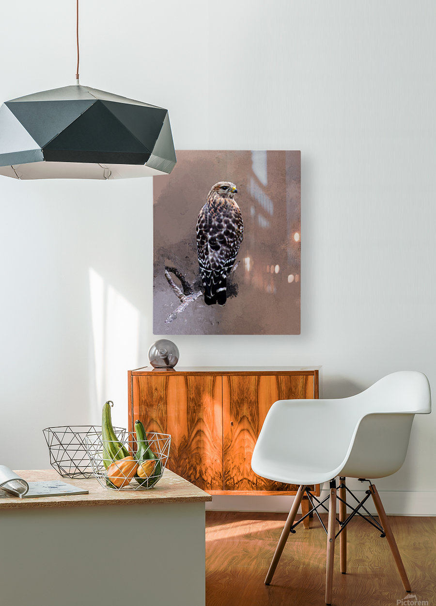 Hawk  HD Metal print with Floating Frame on Back