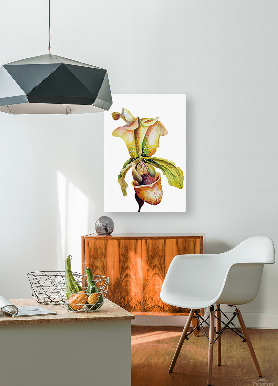 Blooming Paphiopedilum Orchids  HD Metal print with Floating Frame on Back