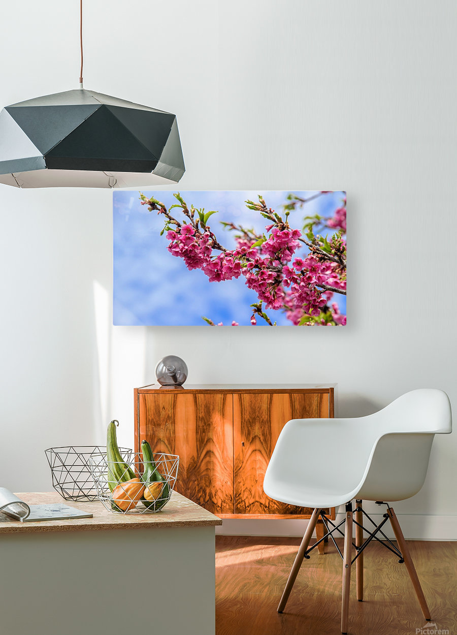 Tree XIII - Cherry tree  HD Metal print with Floating Frame on Back