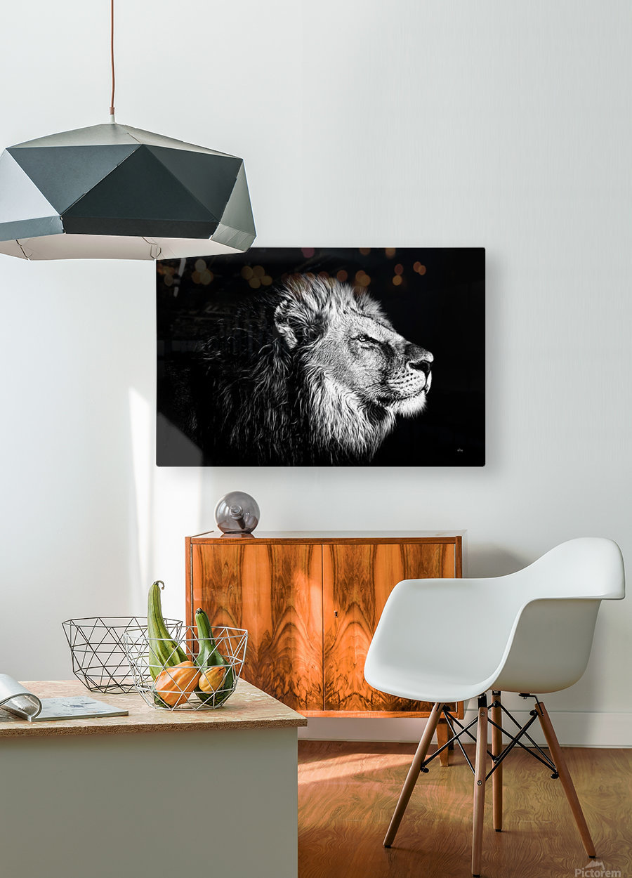 Lion with Attitude  HD Metal print with Floating Frame on Back