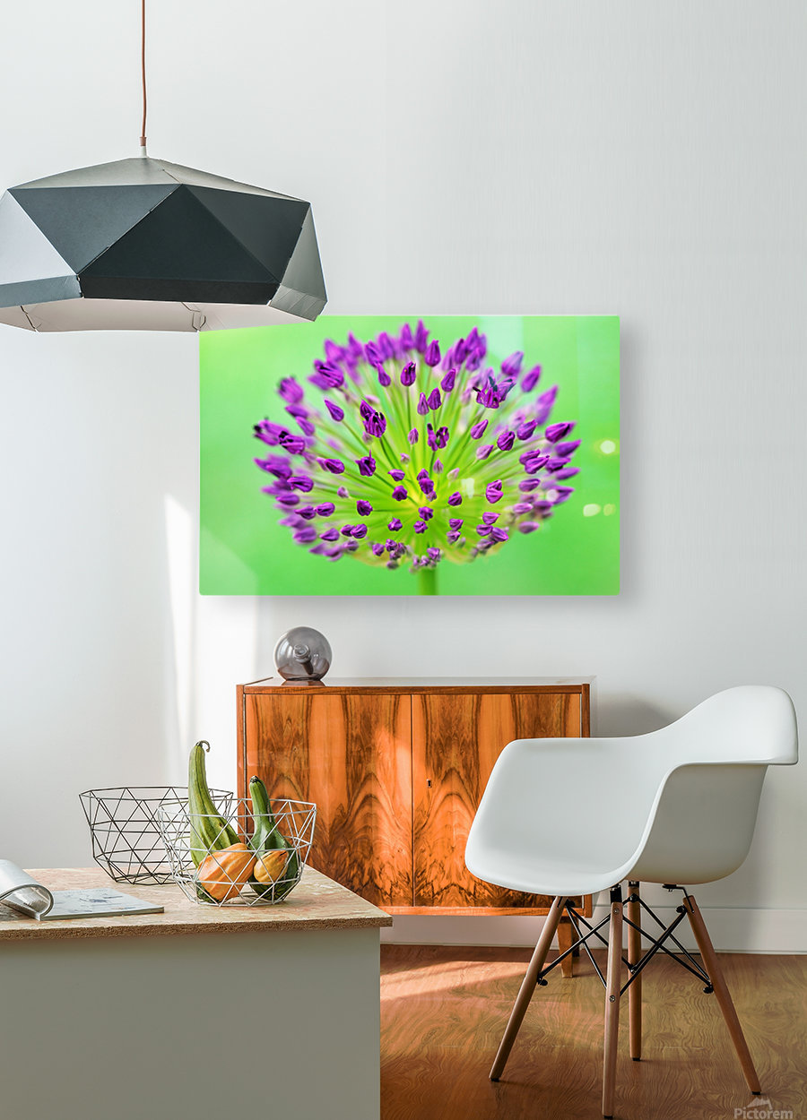 Neon Allium  HD Metal print with Floating Frame on Back