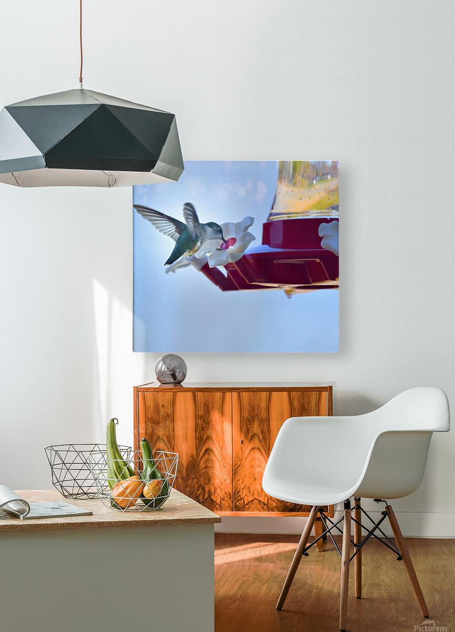Oiseau-mouche  Impression métal HD avec cadre flottant sur le dos