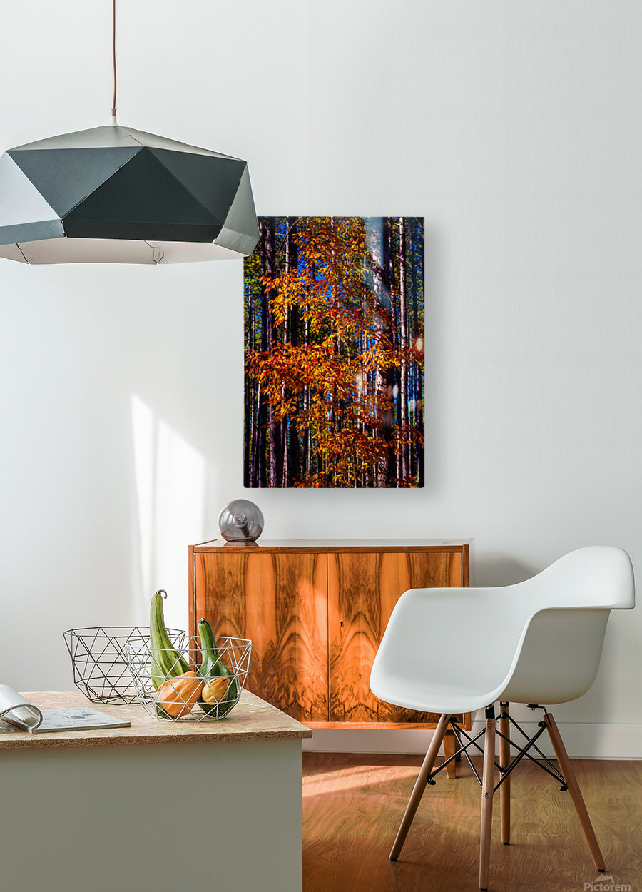 Autumn Fire  HD Metal print with Floating Frame on Back