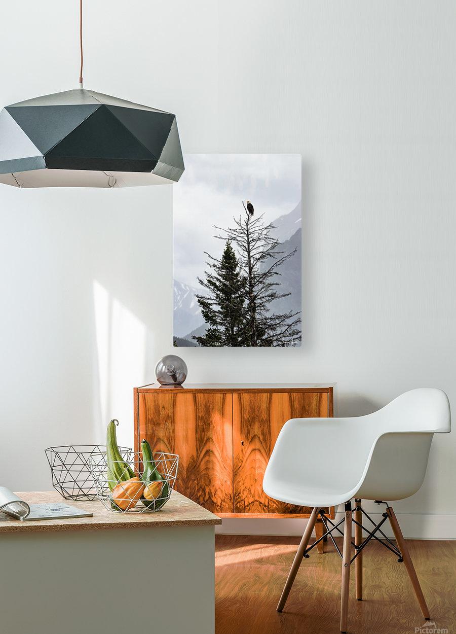 Bald Eagle In Banff National Park  HD Metal print with Floating Frame on Back