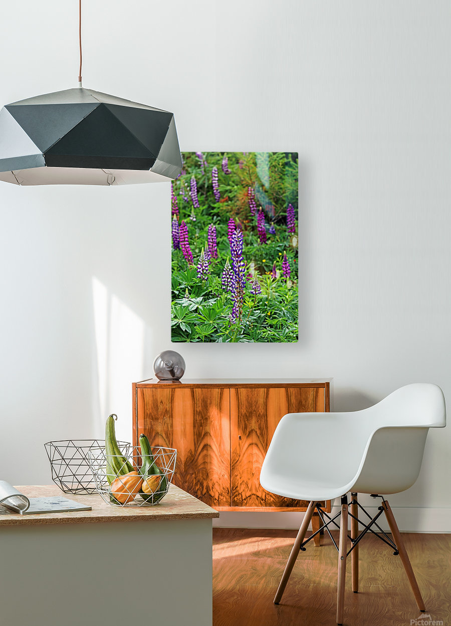 Shades Of Purple Lupine  HD Metal print with Floating Frame on Back