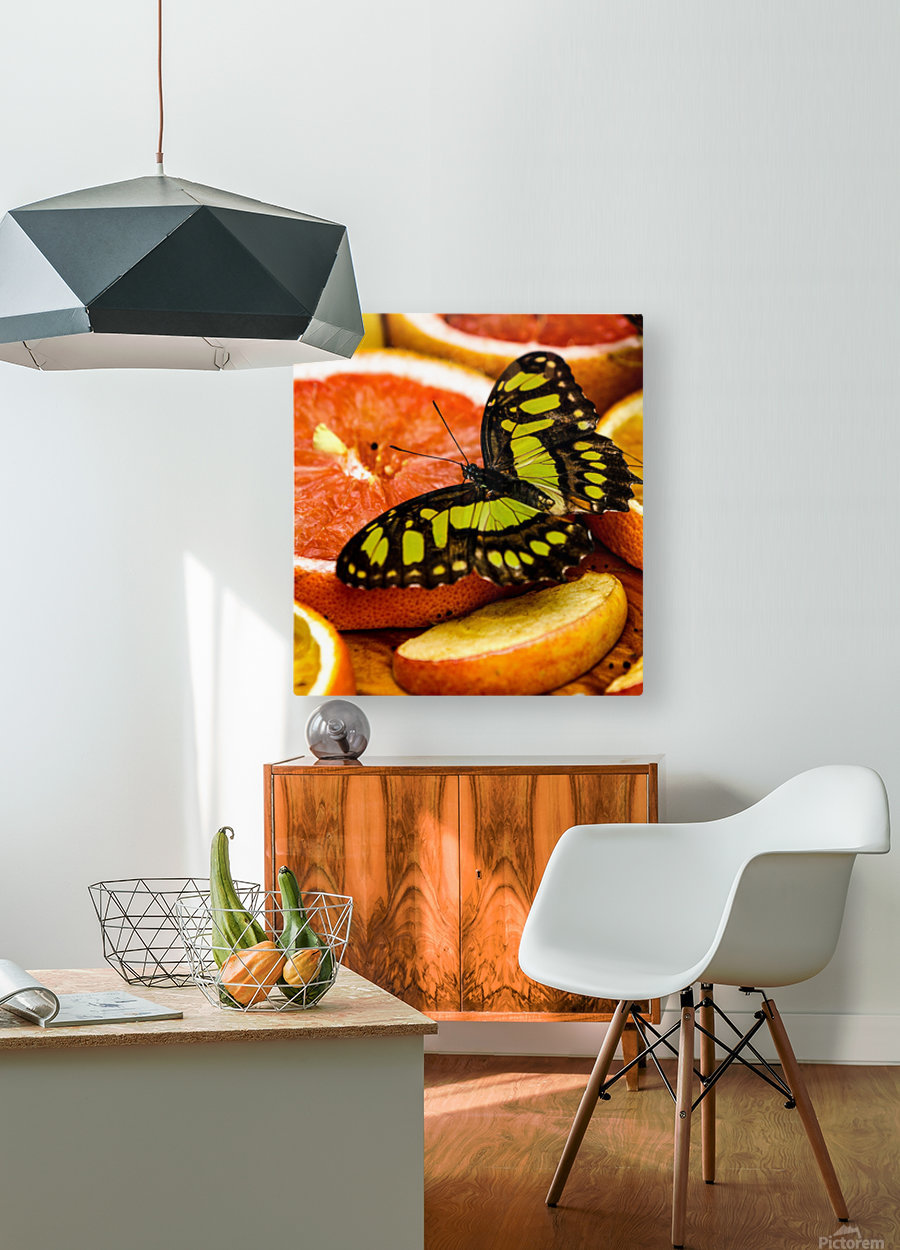 Butterfly And Oranges  HD Metal print with Floating Frame on Back