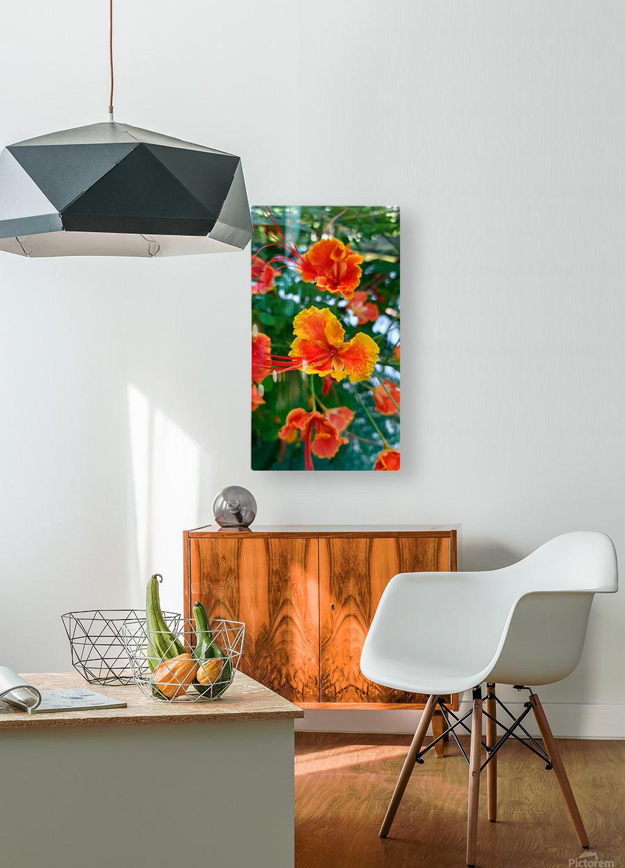 Orange gumamela  HD Metal print with Floating Frame on Back