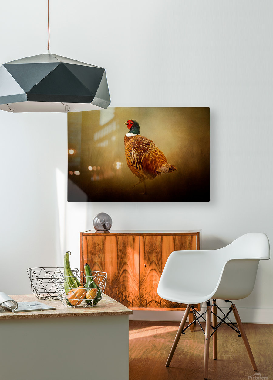 Ring Necked Pheasant  HD Metal print with Floating Frame on Back