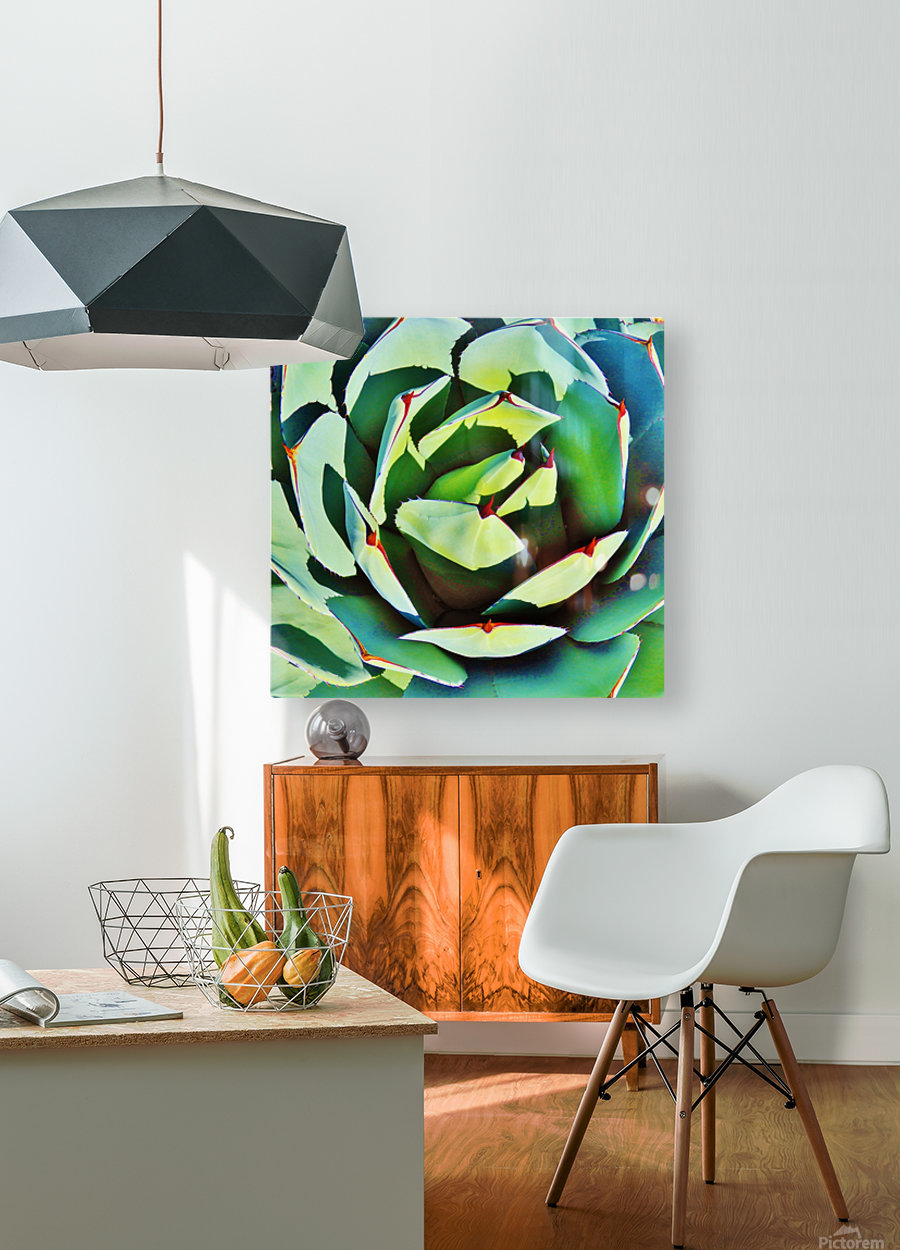 Succulent  HD Metal print with Floating Frame on Back